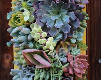 "SALE!! 12"" x 7""-Custom Succulent Vertical Garden Made to order"