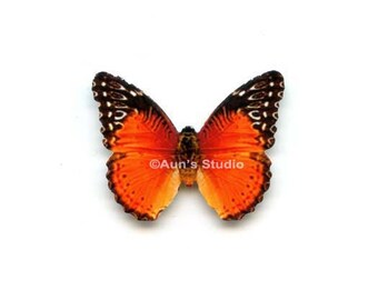 12 Small Paper Butterflies, Realistic 1 inch Paper Butterflies - Red lacewing Butterfly