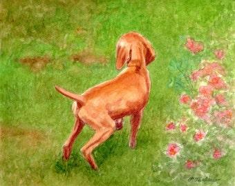 Vizsla Art Print, Vizsla Print, Vizsla Puppy in Garden Print, Vizsla Puppy Art, Dog Art, Vizsla Watercolor Painting by P. Tarlow