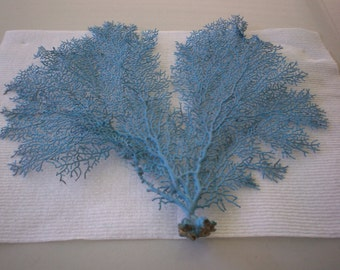 Sea Fan dyed Island Splash color  (Ea).