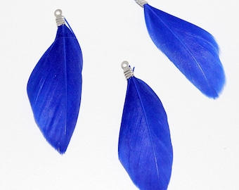 3 x Royal Blue feathers