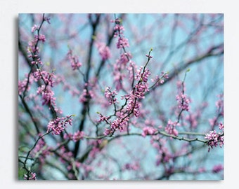 Tree branches large wall art canvas, pink blossom Spring nature photography, aqua blue wall art, bedroom wall decor, artwork for girls room