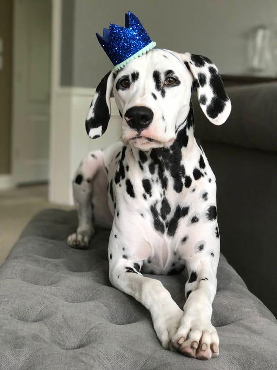 Dog Birthday Hat    Dog Birthday Party    Dog Birthday Crown    Dog Costume    Pet Party    Dalmation