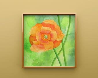 Orange Poppy Print from Original Watercolor