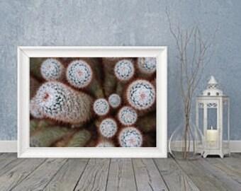 Fine art photography digital Print Fluffy Cactus