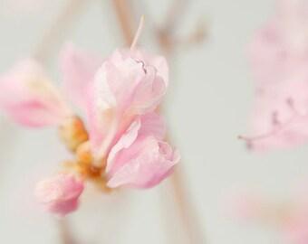 Pink Azalea Photograph,  Floral Art Print,  Flower Photography, Pink Wall Decor, Bedroom Art, Pastel Wall Art