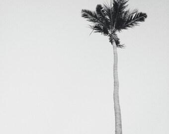 Black + White Beach Photography or Color   Minimalist Art Print   Palm Tree Print   Photography Print   Black White Coastal Wall Art Prints