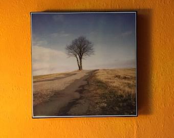 DieLucy Polaroid photo on canvas 20x20