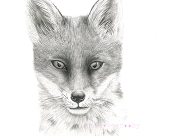 Fox giclee print/ Fox cub Giclee print/ fox graphite drawing