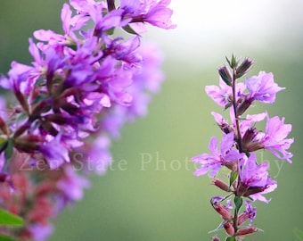 Purple Wall Art. Purple Flower Photography. Spring Flowers Macro Photography. Purple and Mint Green Wall Hanging. Floral Wall Decor.