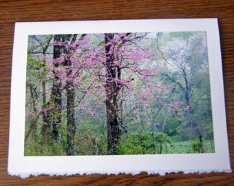 Any 5 Cards - You Pick 5x7 Blank Photo Note Cards  - Greeting Card Set from Fine Art Photos