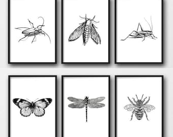 Set of 6 insect prints