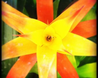 LLG/ floral photography nature photography (orange yellow flower star shape closeup macro photography photo print wall art home decor)