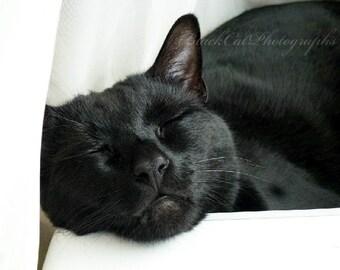 Black Cat, Halloween, Fine art Photograph, Cat Nap, cat lover, feline, 5x7 black cat picture, cat wall art, black cat decor, pet photo print