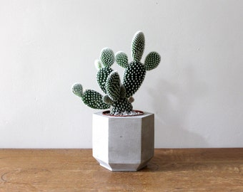 Medium Hexagonal Concrete Planter perfect for a Cactus or Succulent Plant // Concrete Plant Pot- Handmade