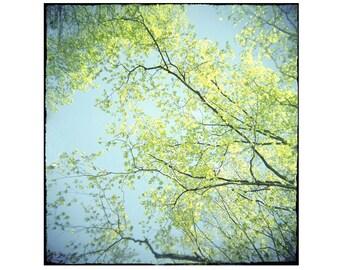 Nature Photography, Holga Lomography,  Tree Landscape, Abstract Wall Decor, Chartreuse Turquoise Decor, Rustic Decor, Woodland Art