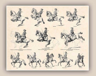 Horse Riding School Print  Antique Print Horse Dressage Equestrian Print, 14x11 Print, country cottage decor