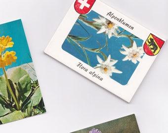 Vintage Souvenir: mountain flowers Photograph.