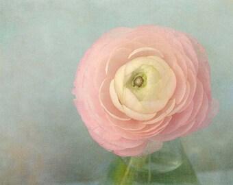 Pink Ranunculus Print,  Cottage Chic Wall Decor, Flower Photography, Flower Art Print