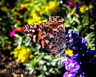 Painted Lady Butterfly Photo Print