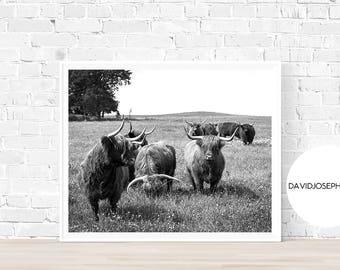 Highland Cow Print, Scottish Cow Print, Black and White, Cattle Print, Farm Animal, Nursery Print, Digital Download, Animal Photography