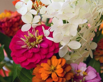 Zinnias: Photography Download