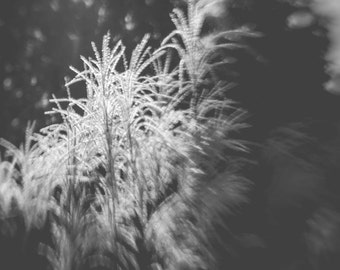 Black and White Photography, 8x12 Print, Nature Photography, Dreamy Photography, Enchanting, Fine Art Black and White Photography, Soft
