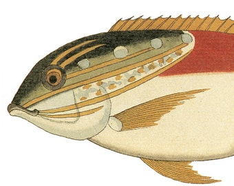 Hand-cut wooden jigsaw puzzle. FANCY FISH 2. Renard. Wood, collectible. Bella Puzzles.