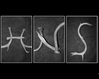 Antler Alphabet Art