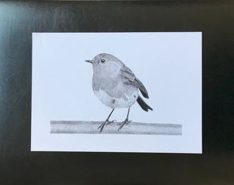Robin Pencil Drawing Wall Art Print