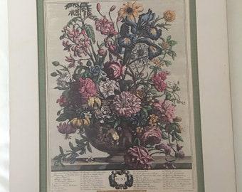 Floral Print by Rob Furber Gardiner of Kensington Month of June