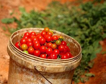 Cherry Tomato 'Sweetie' 20 Seeds - Organic,super sweet, high yield