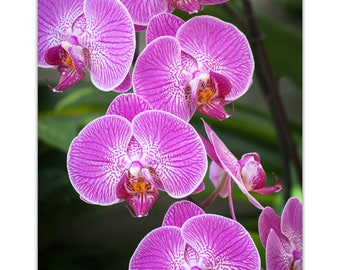 Orchid Flower Photograph Digital Download |Fine Art Photography | wall art |flower image | floral photo