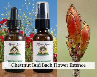 Chestnut Bud Bach Flower Essence, Dropper or Spray for Learning from Past Mistakes Instead of Repeating Them