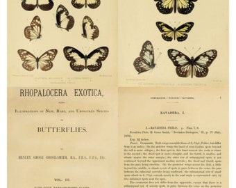 Butterflies V2 Collage Sheet, Vintage Book Page Illustrations, 1 Dollar Deal - Digital Download JPG File by Swing Shift Designs