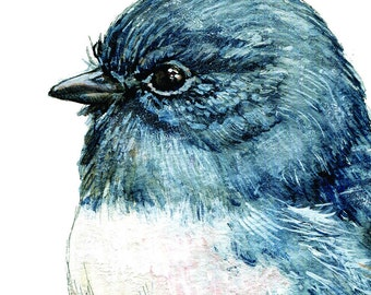 New Zealand native bird Toutouwai, illustrated Large print, from original watercolor and ink painting artwork, Wild life wall art