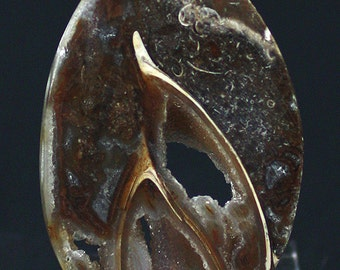 Polished Agatized Gastropod Fossil Slice, India - Mineral Specimen for Sale