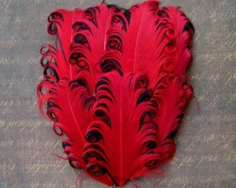 Nagorie Feather Pad - 1 Red on Black Curled Goose Feather Pad