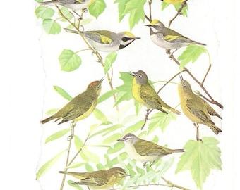 10 Old 1936 BIRDS of AMERICA Louis Agassiz Fuertes Book Plates