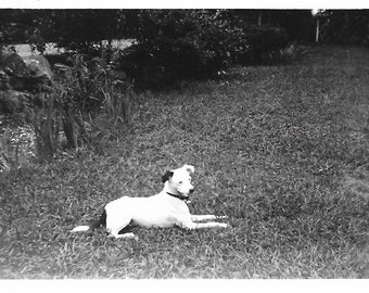 "Vintage Snapshot ""Skippy"" Sweet Little Dog Poses On The Lawn Black & White Small Dog Mixed Breed Old Photo Found Vernacular Photography"