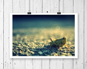 Picture grasshopper under the autumn sun, print wall, fine art photography, 8x12, 10x15, 14x21, 16x24, 18X27, wall deco, green soft blue