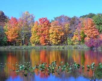 Fall Photography 8x12 Reflection of Trees in a Pond with Autumn Leaves, Ohio Home Decor