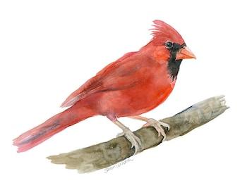 Cardinal Watercolor Painting - Giclee Print - Fine Art Print - 10 x 8 - Bird Painting 11 x 8.5