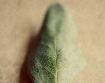 Botanical print, green leaf art, neutral colors, beige wall art, brown and green decor,fine art print, botanical nursery, green and beige