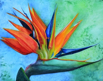 "Bird of Paradise,fine art giclee reproduction of an original watercolor painting by Meike Geisler;10""x14"" flower,reds,yellows,blues,greens"