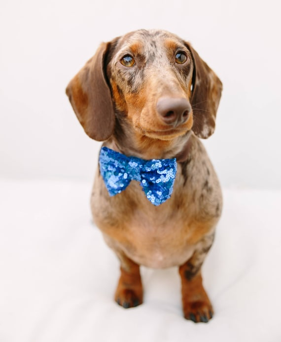 Dog Bow Tie    Dog Costume    Cat Neck Tie    Bowtie for Kitty    Pet Bow Tie    Cat Costume