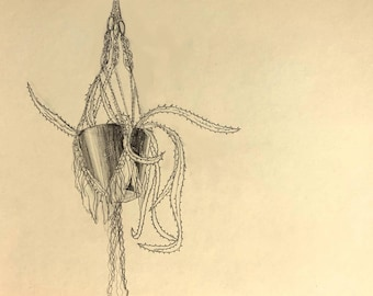 Hanging Plant no. 1. 8 1/2 in. x 11 in. original drawing. pencil on paper