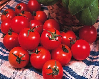 Tomato Gardeners Delight 50 seeds Vegetable