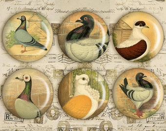 Digital Collage Sheet - 1 inch Circles - Printable Download - Printable Images for bottle caps, jewelry pendants - BEAUTY OF PIGEONS