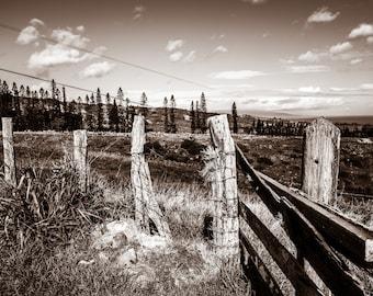 Island Fence Lines, Maui, Hawaii